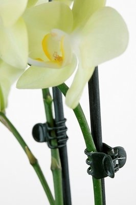 Orchidee Haarclip Large